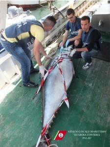L'esemplare di tonno confiscato dalla Capitaneria di Porto